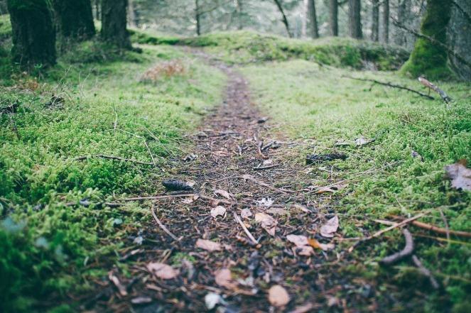 should our path